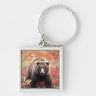 USA, Alaska, Denali NP, female Grizzly Bear Silver-Colored Square Key Ring
