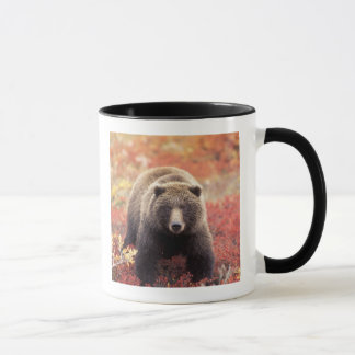 USA, Alaska, Denali NP, female Grizzly Bear Mug