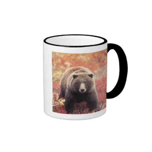 USA, Alaska, Denali NP, female Grizzly Bear Coffee Mug