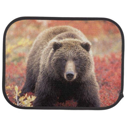 USA, Alaska, Denali NP, female Grizzly Bear Car Mat