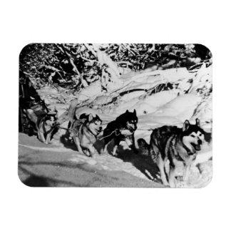 USA Alaska eskimo Malamute sled racing 1970 Rectangular Photo Magnet