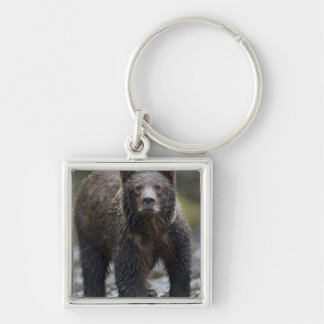 USA, Alaska, Freshwater Bay, Brown Grizzly) Silver-Colored Square Key Ring