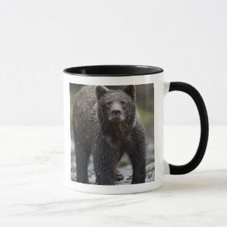 USA, Alaska, Freshwater Bay, Brown Grizzly) Mug