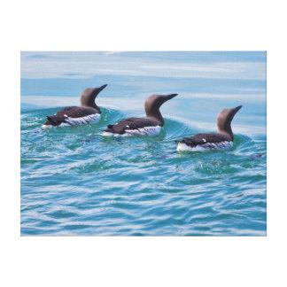 USA, Alaska, Glacier Bay National Park 6 Stretched Canvas Print
