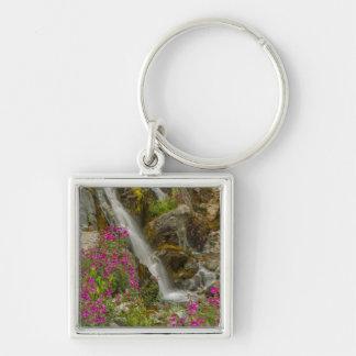 USA, Alaska, Glacier Bay National Park. Fireweed Key Ring