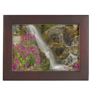 USA, Alaska, Glacier Bay National Park. Fireweed Memory Boxes