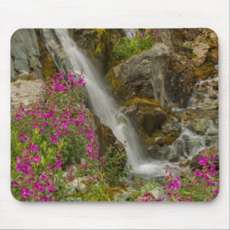 USA, Alaska, Glacier Bay National Park. Fireweed Mouse Mat