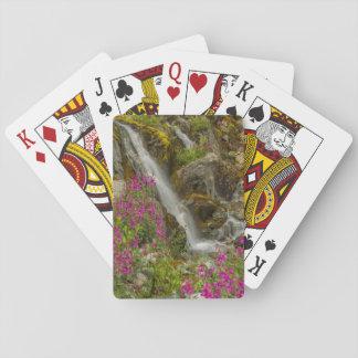 USA, Alaska, Glacier Bay National Park. Fireweed Poker Deck