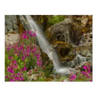 USA, Alaska, Glacier Bay National Park. Fireweed Postcard