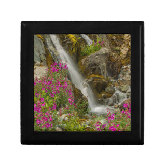 USA, Alaska, Glacier Bay National Park. Fireweed Small Square Gift Box
