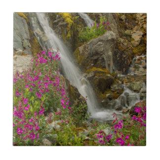 USA, Alaska, Glacier Bay National Park. Fireweed Tile