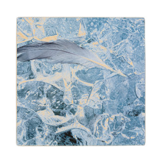 USA, Alaska, Glacier Bay National Park. Gull Maple Wood Coaster