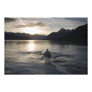 USA, Alaska, Glacier Bay National Park, Photograph