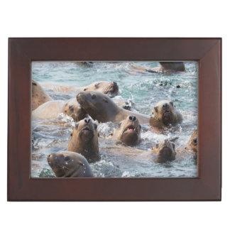USA, Alaska, Glacier Bay National Park. Steller Keepsake Box