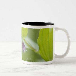 USA, Alaska, Glacier Bay National Park. Two-Tone Coffee Mug