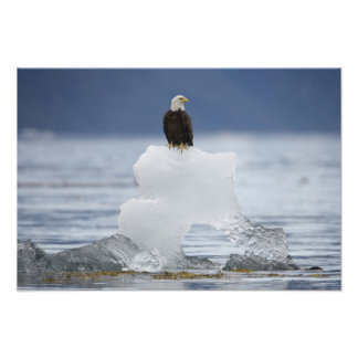 USA, Alaska, Holkham Bay, Bald Eagle Photo Print