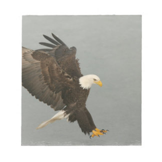USA, Alaska, Homer. Bald eagle in landing Notepad