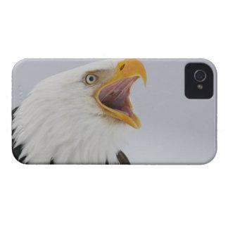 USA, Alaska, Homer. Bald eagle screaming. Credit iPhone 4 Covers