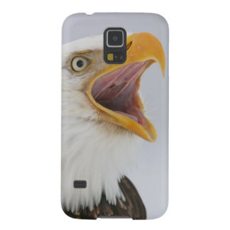 USA, Alaska, Homer. Bald eagle screaming. Credit Galaxy S5 Covers
