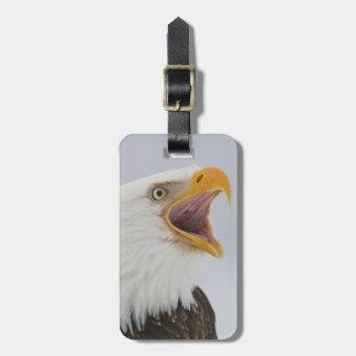 USA, Alaska, Homer. Bald eagle screaming. Credit Luggage Tag
