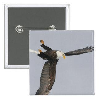 USA, Alaska, Homer. Bald eagle upside down start 15 Cm Square Badge