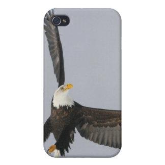 USA, Alaska, Homer. Bald eagle upside down start iPhone 4/4S Covers