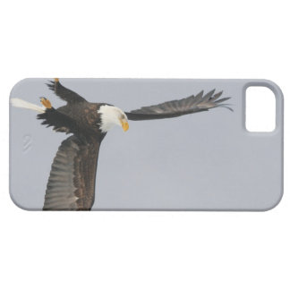 USA, Alaska, Homer. Bald eagle upside down start iPhone 5 Case