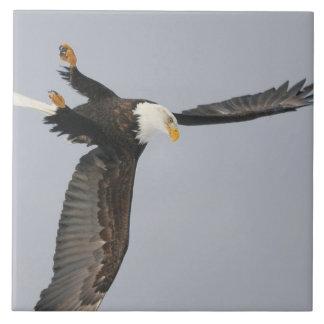 USA, Alaska, Homer. Bald eagle upside down start Tile