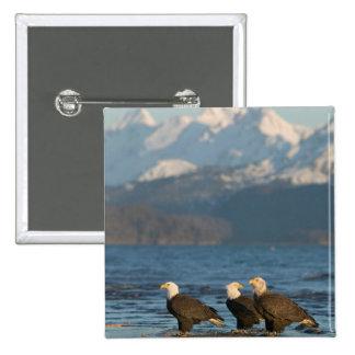 USA, Alaska, Homer, Bald Eagles Haliaeetus 15 Cm Square Badge