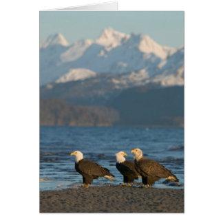 USA, Alaska, Homer, Bald Eagles Haliaeetus Card