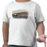 USA, Alaska, Humpback Whale Megaptera T Shirt