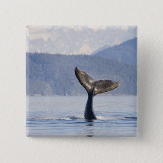 USA, Alaska, Icy Strait. Humpback Whale calf 15 Cm Square Badge