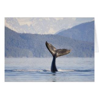 USA, Alaska, Icy Strait. Humpback Whale calf Card