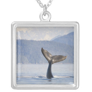 USA, Alaska, Icy Strait. Humpback Whale calf Silver Plated Necklace