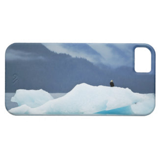USA, Alaska, Inside Passage. Bald eagle perched iPhone 5 Covers