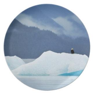 USA, Alaska, Inside Passage. Bald eagle perched Plates