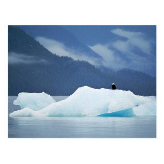 USA, Alaska, Inside Passage. Bald eagle perched Postcard