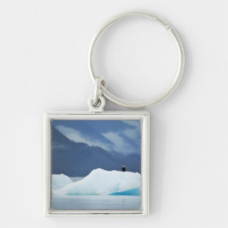 USA, Alaska, Inside Passage. Bald eagle perched Silver-Colored Square Key Ring
