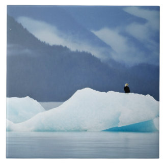 USA, Alaska, Inside Passage. Bald eagle perched Tile