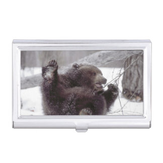 USA, Alaska. Juvenile grizzly plays with tree Business Card Holder