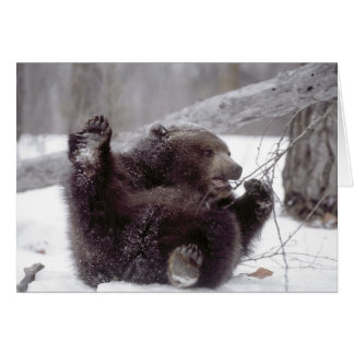 USA, Alaska. Juvenile grizzly plays with tree Card