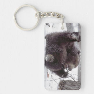 USA, Alaska. Juvenile grizzly plays with tree Double-Sided Rectangular Acrylic Key Ring