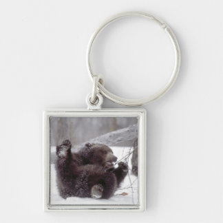 USA, Alaska. Juvenile grizzly plays with tree Key Chain