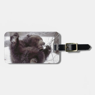 USA, Alaska. Juvenile grizzly plays with tree Luggage Tag