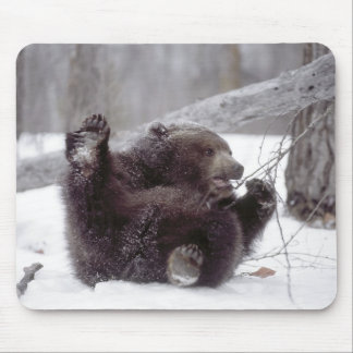 USA, Alaska. Juvenile grizzly plays with tree Mouse Pad