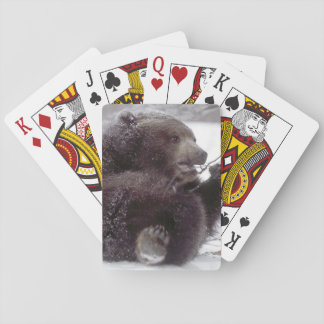 USA, Alaska. Juvenile grizzly plays with tree Playing Cards