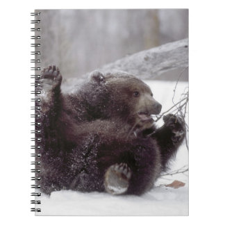 USA, Alaska. Juvenile grizzly plays with tree Spiral Notebook