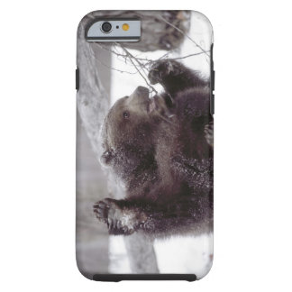USA, Alaska. Juvenile grizzly plays with tree Tough iPhone 6 Case