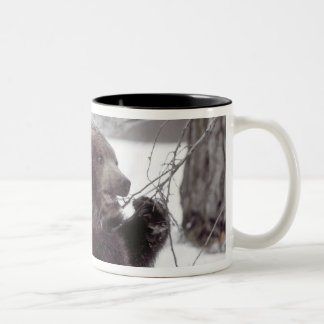 USA, Alaska. Juvenile grizzly plays with tree Two-Tone Coffee Mug