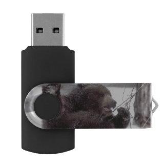 USA, Alaska. Juvenile grizzly plays with tree USB Flash Drive